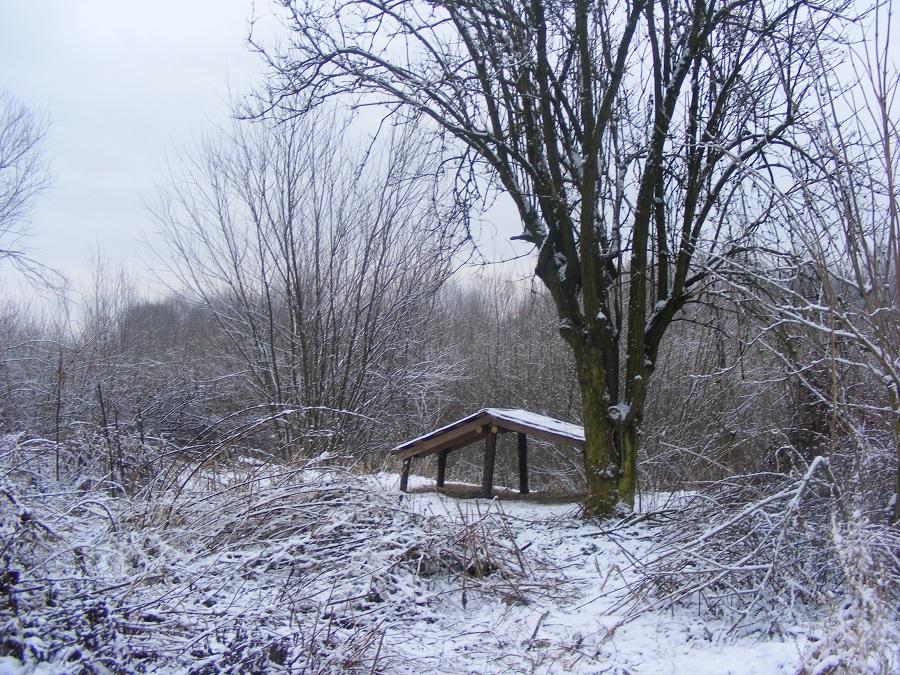 Rok 2016 , okolice Raby w Stanisławicach